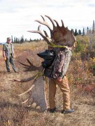 Red packing out horns